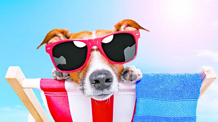 Vacaciones, ¿qué hacemos con nuestras mascotas?
