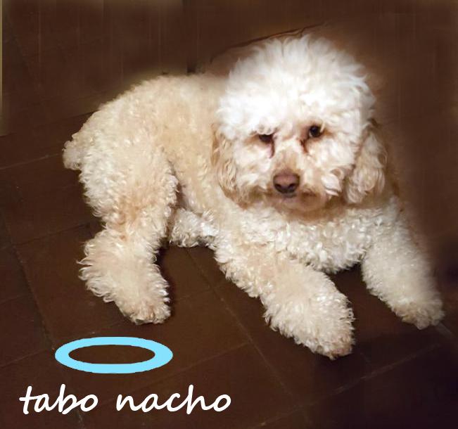 Tabo Nacho (03/01/2014 - 19/03/2018)